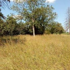 Zalabaksa: Huge builing plot with old house