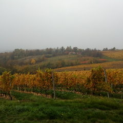 Csörnyeföld: Vineyard in the Mura Valley
